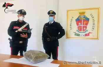 Agrigento. Blitz dei Carabinieri a Canicattì, sequestrati 2 kg di marijuana - Libertà Sicilia