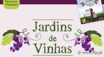 Jardim de Vinhas em Palmela - RTP