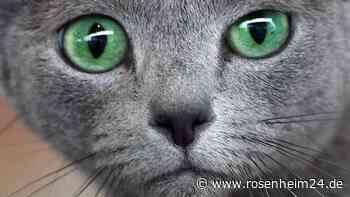 Katzenhasser legt Kiftköder in Riedering aus: Schon zwei Tiere gestorben