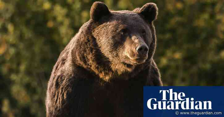 Liechtenstein prince accused of shooting Romania's largest bear