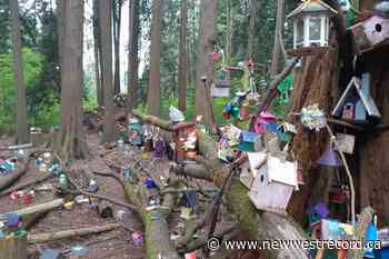 Massive fairy forest found in Metro Vancouver's Redwood Park - The Record (New Westminster)