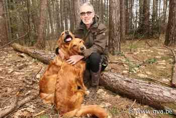"""Dierenvrienden willen """"soort rijbewijs"""" om opgeleide honden ... (Herselt) - Gazet van Antwerpen"""