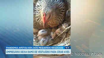 Empresário de Lavras (MG) deixa ramo do vestuário para criar aves - HORA 7