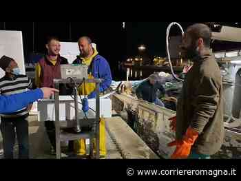 Cesenatico, pescati 60 quintali di tonni alletterati - Corriere Romagna
