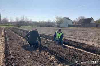 Sevran : des jardins biologiques pour s'insérer professionnellement - RTL.fr