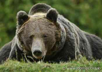 Liechtenstein prince under investigation for shooting 'largest' brown bear in Romania