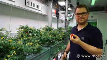 Ernährung im All: Gurken für Mond und Mars – wie ein Raumfahrt-Ingenieur aus Brandenburg Pflanzen züchten hilft - moz.de