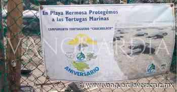 Aumentan los nidos en campo tortuguero, en Pueblo Viejo - Vanguardia de Veracruz
