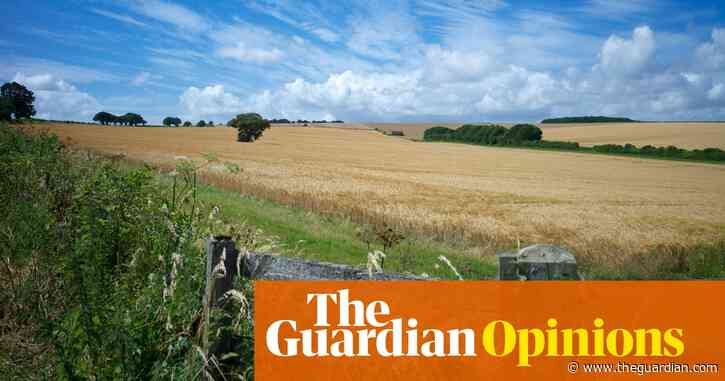 The ersatz hedge: how we're debasing England's rural landscape | Richard Mabey