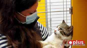 Tier-Drama in Vilseck: 23 Katzen aus Messie-Wohnung gerettet - Onetz.de