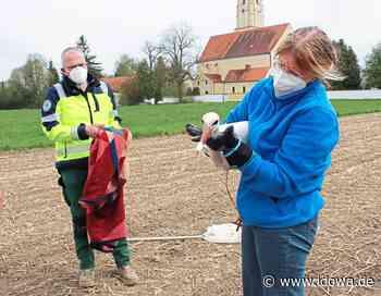 Mallersdorf-Pfaffenberg - Storch trotz Rettungsaktion eingeschläfert - idowa