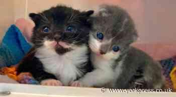 Cat rescue team in bid to raise cash to support animals