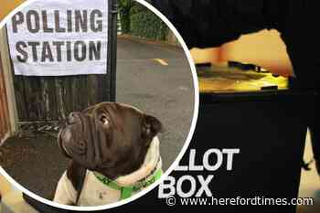 Dogs at polling stations in Herefordshire on local elections day 2021
