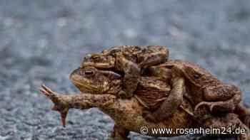 Bund Naturschutz rätselt in Rott über Amphibiensterben