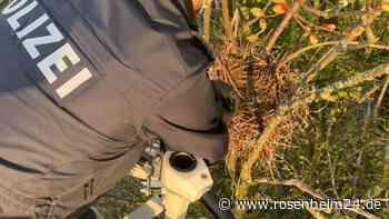 Einsatz um Leben und Tod: Polizei und Feuerwehr retten hilflose Vögel von Fahrbahn in Rosenheim