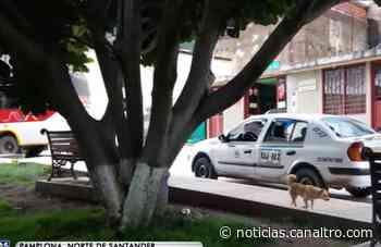 Masacre de perros en Carcasí - Canal TRO