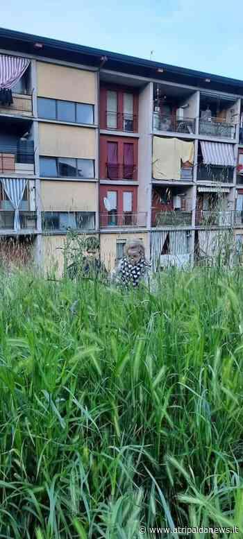 Erba alta tra le palazzine di Alvanite ad Atripalda: scatta la protesta sui social per la contrada periferica abbandonata - Atripalda News