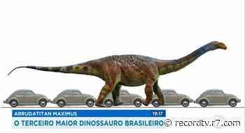 Terceiro maior dinossauro brasileiro viveu em Monte Alto - Record TV
