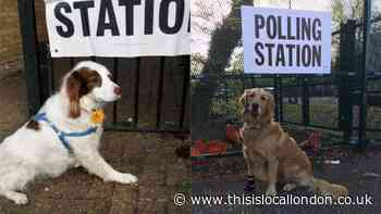 Dogs at polling stations: The UK's best voting day tradition explained