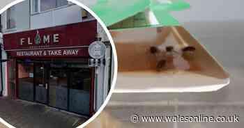 Restaurant owner continued to serve food despite cockroach infestation - Wales Online