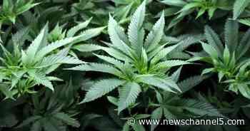 Medical marijuana bill passes the legislature, opponents say it's too weak - NewsChannel5.com