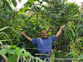 Ex-techie grows terrace 'jungle' - Deccan Herald