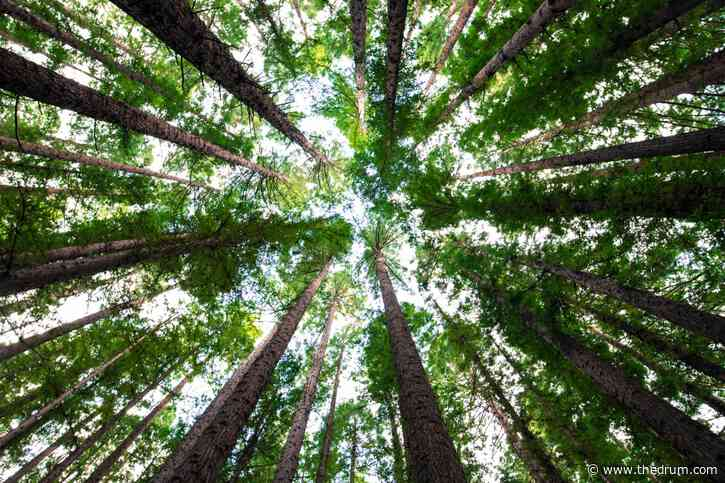 Digital marketing agency Impression plants 10,000 trees and hopes to encourage others to follow
