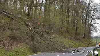 Einsatz für die Sicherheit: Forst fällt Bäume am Eichholz in Uslar - HNA.de
