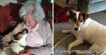 96 year-old adopts 17-year-old dog and urges you to consider rehoming old pets