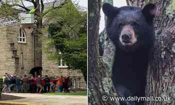 Video: Black bear trapped in Pennsylvania university campus