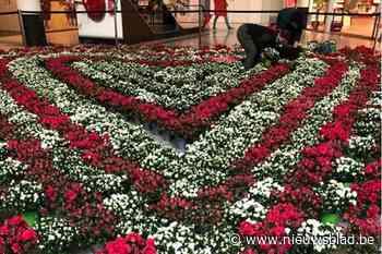 Bloemenhart in Shopping Gent Zuid: azalea's voor moeders én voor de zorg