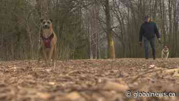 Dog park development in Dorval not sitting well with some dog owners   Watch News Videos Online - Globalnews.ca