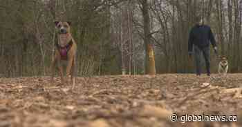 Why a dog park development in Dorval isn't sitting well with everyone - Global News