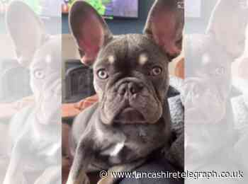 Despicable individuals prey on owners of missing dogs in dognapping blackmail scam