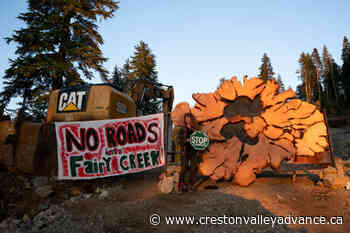 VIDEO: Workers, activists clash at site of Vancouver Island logging operation - Creston Valley Advance
