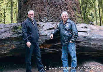 All talk, no action on old growth protection says Wildsight – Creston Valley Advance - Creston Valley Advance