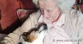 Woman adopts 17-year-old dog and says people should 'not give up on the old'