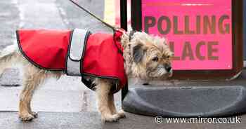 Dogs at polling stations steal the spotlight on 'Super Thursday' election day