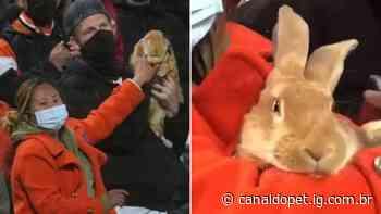 Coelho gigante de gravata borboleta rouba a cena na arquibancada - Canal do Pet