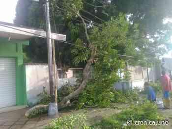 En el sector Campo Alegre de Maturín suman 48 horas sin servicio eléctrico - Crónica Uno