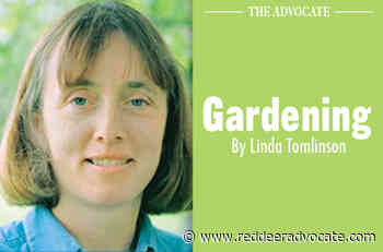 Dividing perennials: Look to plant's root structure - Red Deer Advocate