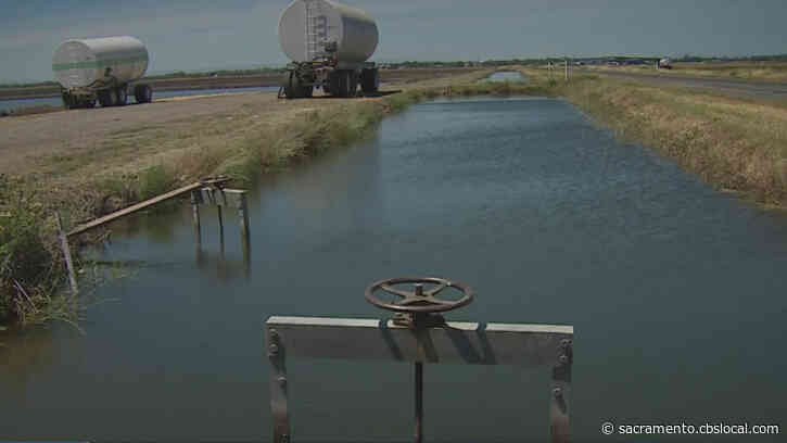 As Surface Water Supplies Dry Up, California Rice Growers Worry About Ripple Effect