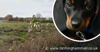 Private walkies for dogs plan on farmland in Solihull - but it will cost - Birmingham Live