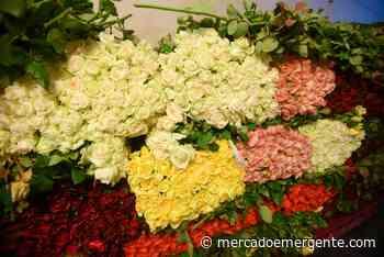 Ofrece Morelos 300 variedades de rosas - Mercado Emergente