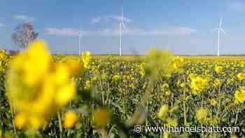 Klimaneutralität: Private Investitionen in nachhaltige Finanzanlagen sollen sich lohnen
