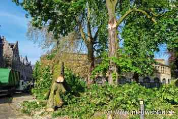 Enorme afgebroken boomtak zorgt voor verkeershinder aan Heuv... (Gent) - Het Nieuwsblad