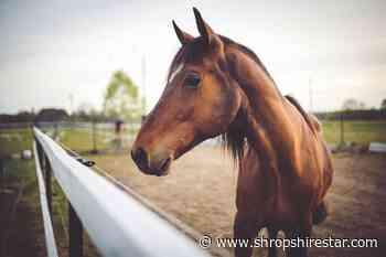 Big horse relay heading for Shropshire - shropshirestar.com