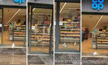 Watch: Gus the gull helps himself to a sandwich from Aberdeen shop - Press and Journal