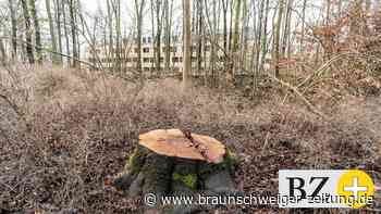 Auch 2021 ist für Wolfsburgs Wald zu trocken