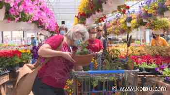 Annual Central Missouri Master Gardener Sale sees both new and experienced green thumbs - KOMU 8